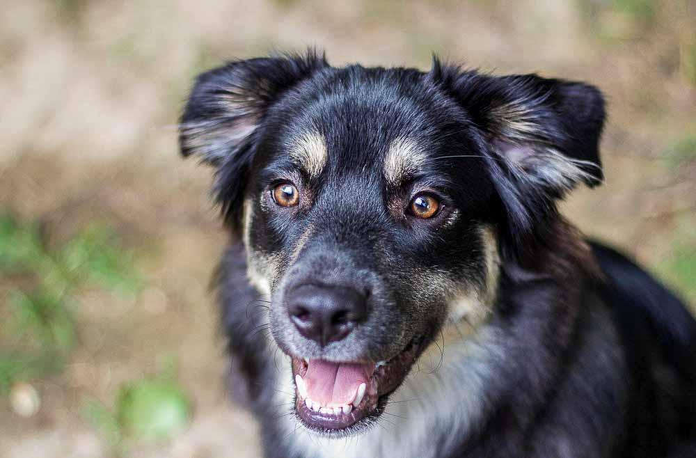 Hundefotografer Jylland