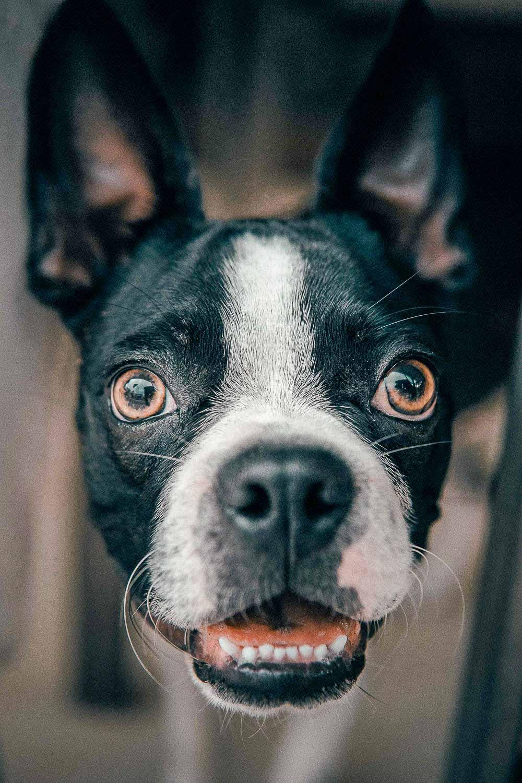 hundefotograf jylland